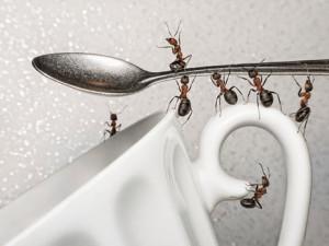 Nenechte mravence hospodařit ve vašem domě