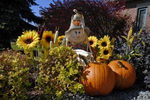 podzim je doma i na zahradě