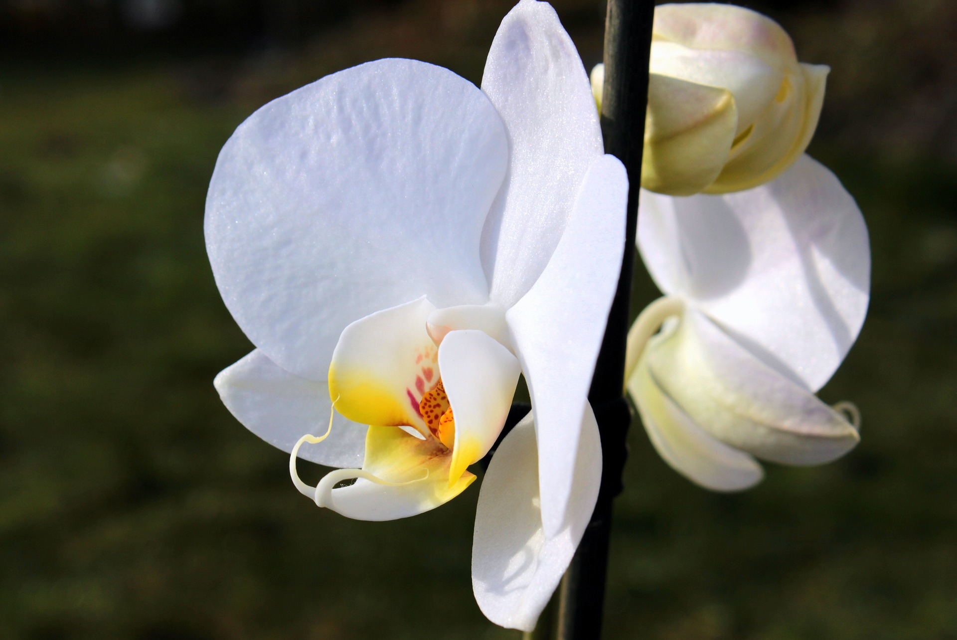 orchid-1221861_1920